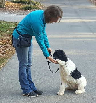 Gracie in Service Dog Training giving her Paw.jpg