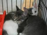 Kitties_one_2011_Feral_Cat_Fun_Day0058.JPG