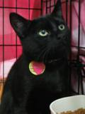 Kitties_two2011_Feral_Cat_Fun_Day0060.JPG