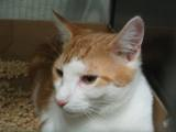 Kitties_three_2011_Feral_Cat_Fun_Day0059.JPG