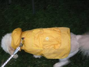 Doggies_Raincoat.JPG