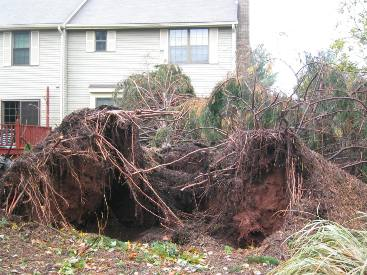 Hurricane_Sandy_2012_three.JPG