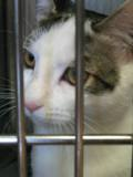 Kitty_seven_2011_Feral_Cat_Fun_Day0065.JPG
