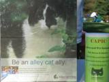 Alley_Cat_Allies_and_CAPIC_2011_Feral_Cat_Fun_Day0008.JPG