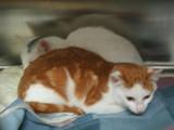 Kitties_seven_2011_Feral_Cat_Fun_Day0064.JPG