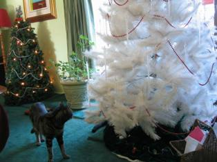 2011_Xmas_tree_Blog_one.JPG