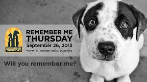Remember-Me-Thursday-Mike-Arms-pet-expert-Steve-Dale-Gregory-Castle-Best-Friends-pet-adoption.jpeg