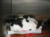 Kitties_six_2011_Feral_Cat_Fun_Day0062.JPG