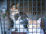 Kitties_one_2011_Feral_Cat_Fun_Day0024.JPG