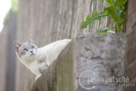 Looking-Up-Cat_Feral_Jason_Putsche_Photography.jpg
