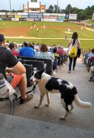 Dog_in_Stands.jpg