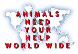 Animals_need_your_help_worldwide.jpg