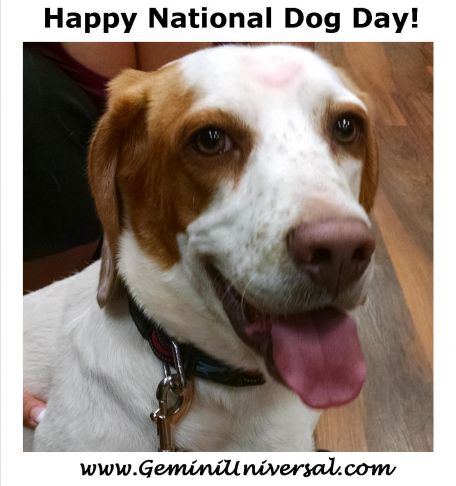 Happy_National_Dog_Day.jpg