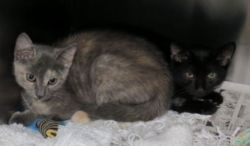 CAPIC kittens rescued.jpg