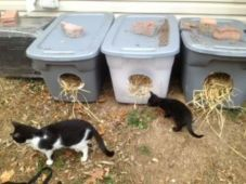 GOR_2_feral_cats_with_shelters.jpg