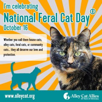 National_Feral_Cat_Day_2015.jpg