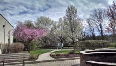 Spring Trees 2016 Shop Rite Plaza.jpg