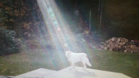 Hero_Dog_with_Sunbeam.jpg