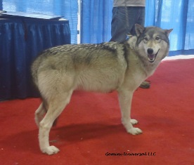 Wolf by Wolf Visions at 2016 Super Pet Expo.JPG