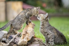 Mom-and-Kitten_ferals_Jason_Putsche_Photography.jpg
